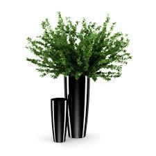 plant black pot model