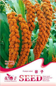 compare prices on ornamental millet seeds shopping buy low