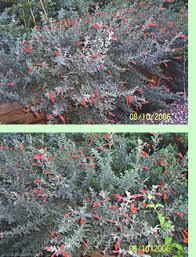 clear lake trowel u0026 trellis garden club local gardening tips