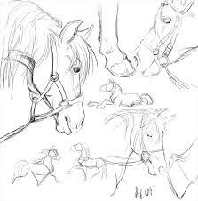 horsestudy explore horsestudy on deviantart