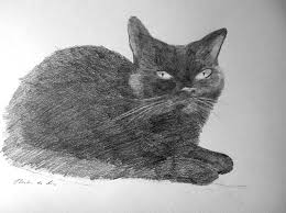 imagenes a lapiz de gatos dibujo a lápiz de grafito de un gato rubén de luis rubio