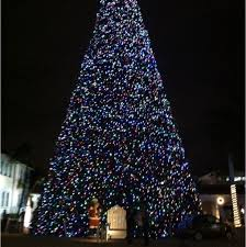 delray delray florida 100 ft tree you can