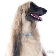 afghan hound dog images afghan hound dog id tags myfamily