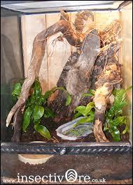 gekko gecko enclosure insectivore