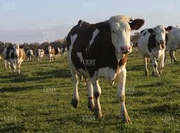 chambre agriculture haute saone edition de vesoul haute saône ces zonages qui sèment le trouble