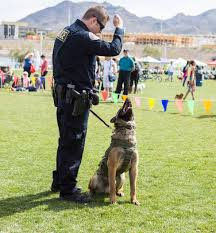 belgian shepherd las vegas roving rovers bark in the park attracts dogs humans in henderson
