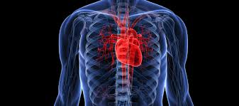 Pictures Of The Human Body Internal Organs Top 10 Most Important Human Body Organs