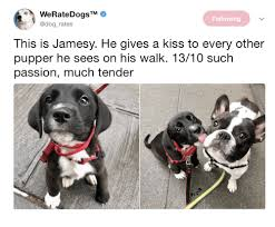 Kiss Me Dog Meme - following this is jamesy he gives a kiss to every other pupper he