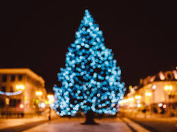 free stock photos of christmas tree pexels