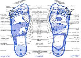 Skeletal Picture Of Foot Best 25 Foot Chart Ideas On Pinterest Reflexology Foot Map