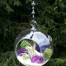 34 best air plant terrariums images on pinterest air plant