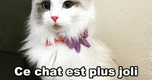 Chat Meme - ce chat â quã bec meme