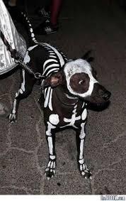 Scorpion Halloween Costume Halloween Costumes Dogs Funny Creative