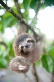 Angry Sloth Meme - sleep all day sleep all night