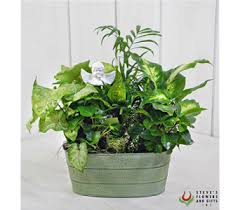 Plant Delivery Plants Delivery Indianapolis In Steve U0027s Flowers And Gifts