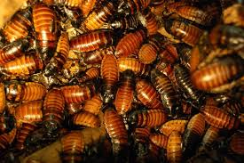 cost to hire a roach exterminator estimates and prices at fixr