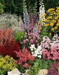 top 10 flowers that bloom all year perennials plants and gardens