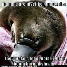 Platypus Meme - sadistic platypus meme