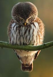 Meme Soon - funny owl mad face soon meme photos pinterest mad face funny