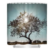 Tree Curtain Single Tree Shower Curtain For Sale By Carlos Caetano