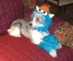 Halloween Dog Costume Rubie U0027s Monster Halloween Dog Costume Blue