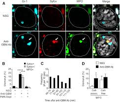 in vivo imaging of inflamed glomeruli reveals dynamics of