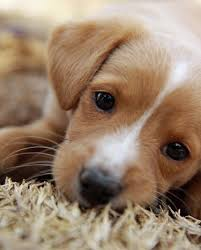 Puppy Eyes Meme - awesome 25 puppy dog eyes meme wallpaper site wallpaper site