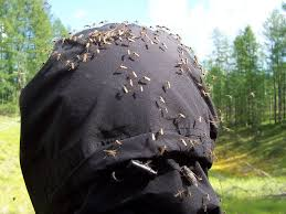 best backyard mosquito control