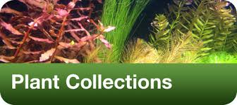 Tropical Aquatic Plants - planted tanks the finest quality aquarium plants from around the