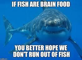Shark Meme - great white shark meme generator imgflip
