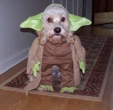 Spirit Halloween Pet Costumes Halloween Pet Costume Contest Petco Furry