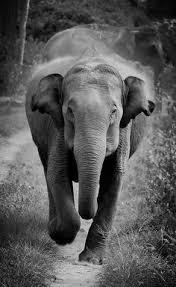 asian giraffe ring holder images 311 best elephants lt 3 images fluffy animals jpg