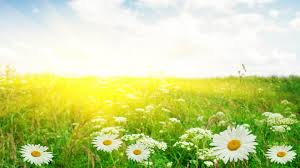 Flower Pictures Sunshine Rays And Flowers Wallpaper