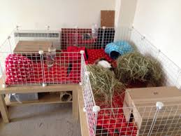 Rabbit Hutch Set Up Guinea Pig Care The Littlest Rescue