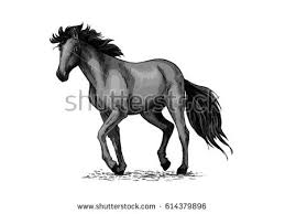 Black Mustang Horse Horse Wild Stallion Running Gallop Jumping Stock Vector 574478371