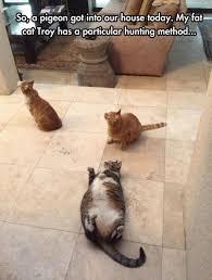 Cat Problems Meme - fat cat problems meme by soydolphin memedroid