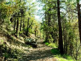 Arizona forest images Things to do it payson az sunset jpg