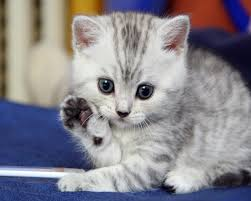 48 top selection of cute kitten pictures
