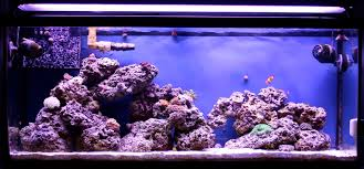 Reef Aquarium Lighting T5 Bulb Combinations W Pictures 3reef Aquarium Forums