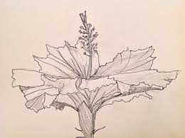 hibiscus flower pen and ink drawings art love light