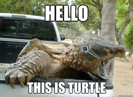 Turtle Memes - hello this is turtle hello turtle quickmeme