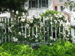 114 best white and green gardens images on pinterest landscaping