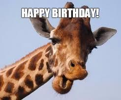 Meme Giraffe - giraffe birthday memes wishesgreeting