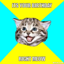 Cat Birthday Memes - memes for funny birthday cat memes thoughtful ideas pinterest