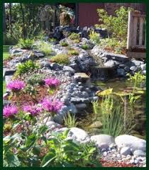 evergreen landscaping ponds landscapes waterfalls paver