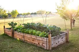 how to build a raised vegetable garden bed australia garden