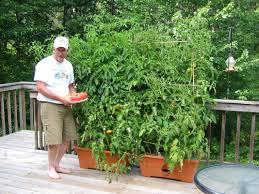 inside urban green garden patch grow box
