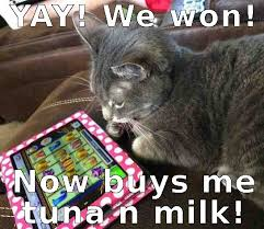 Talking Cat Meme - cat gambling problems kitties wild kitties pinterest cat