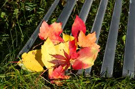how to winterize your yard in fall