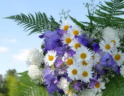 the flowers of summer at flowers summer white free photo on pixabay